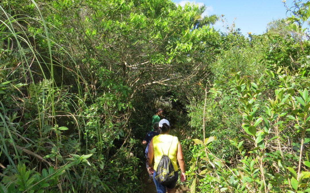 3 melhores trilhas para fazer em Bombinhas